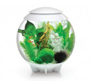 BiOrb Halo Aquarium